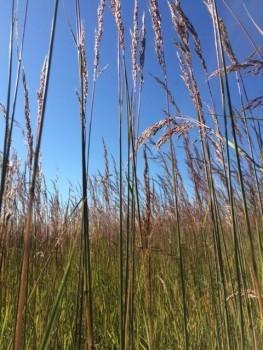 grassy-263x350