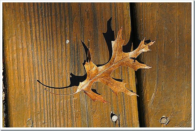 leaves[4]